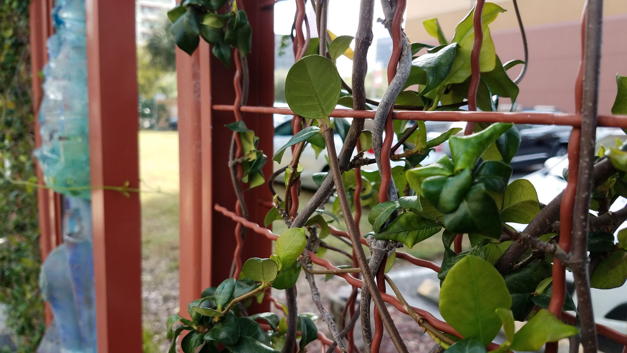 Woven wire mesh used to create a living wall