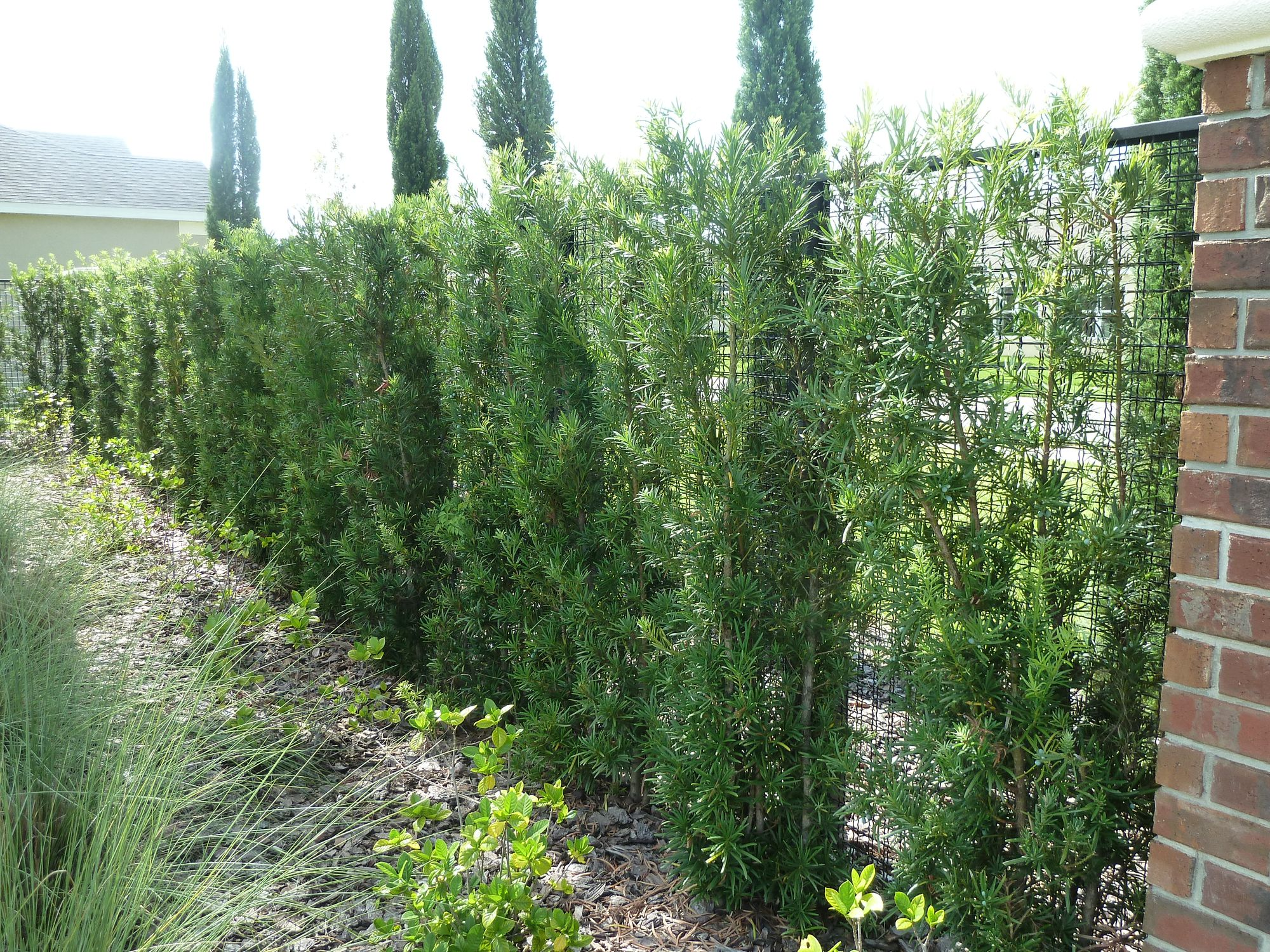 Privacy fence created with living plant walls